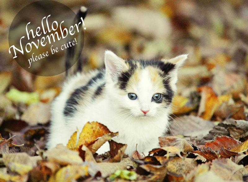 hello-november-be-cute