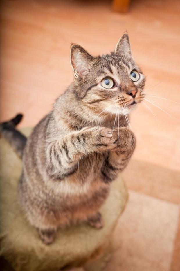Cum sa hranesti o pisica - In etape