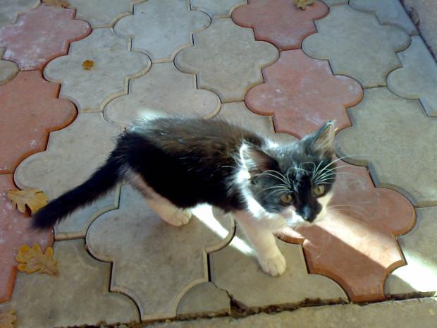 pisica iasi 2008