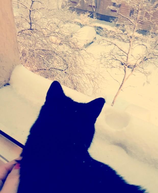 dimineti de iarna ianuarie