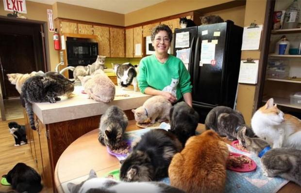 femeie pisici 1000