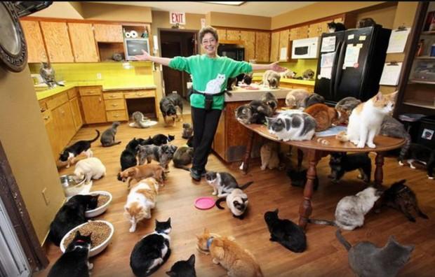 iubitoare pisici Lynea Lattanzio