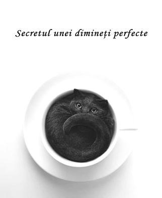 secretul unei dimineti perfecte