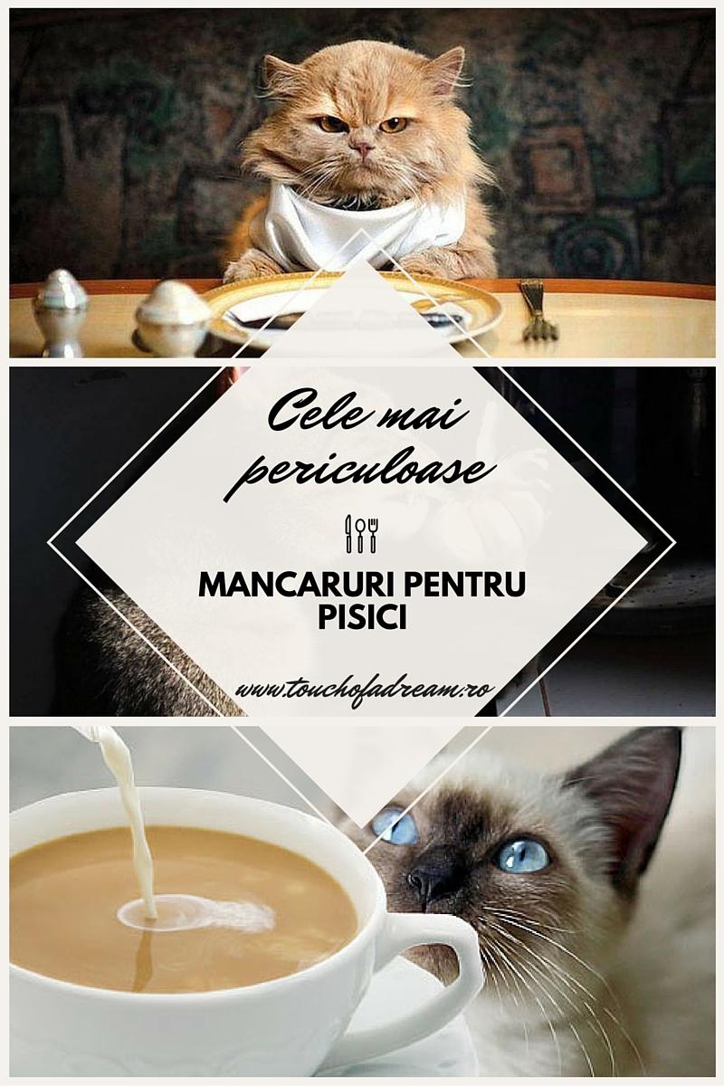 cele mai periculoase mancaruri pentru pisici