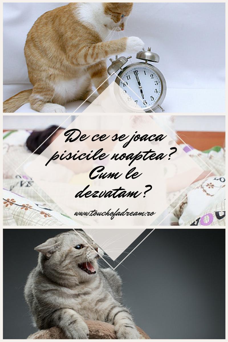 De ce se joaca pisicile noaptea? Cum le dezvatam?