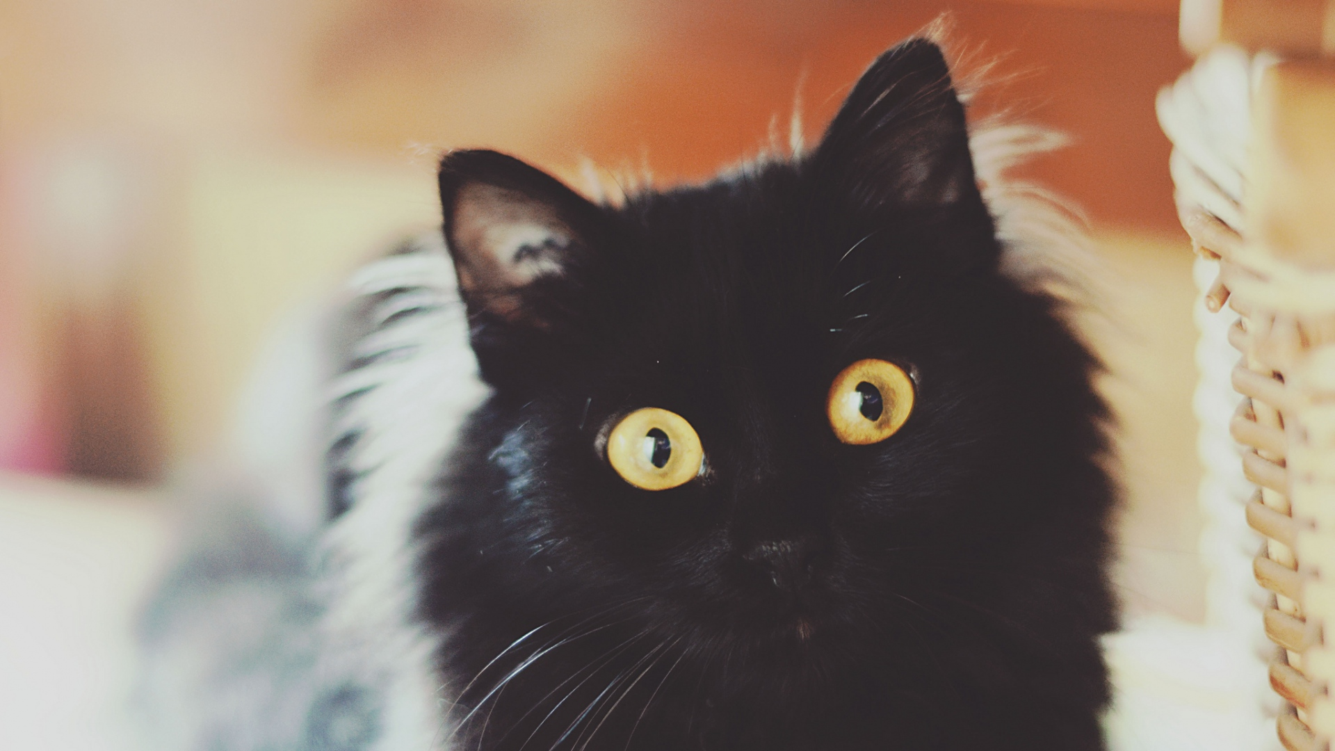 wallpaperuri cu pisici5
