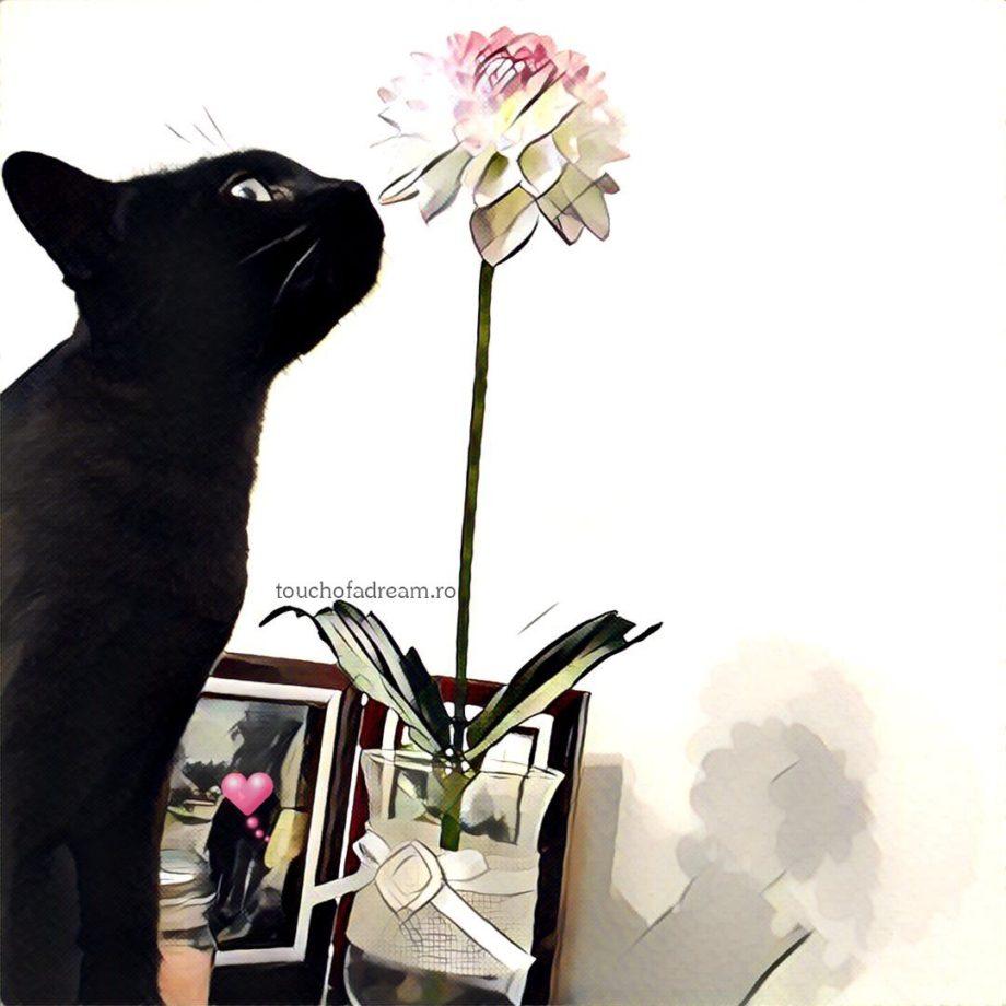 aplicatie prisma pisica
