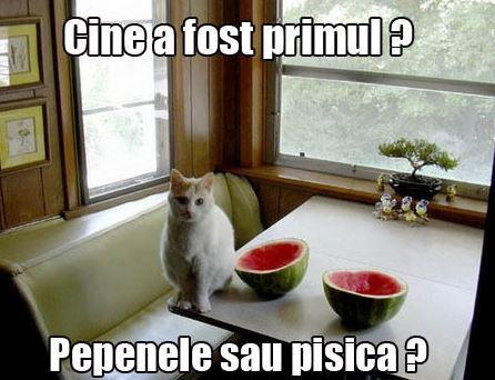 pepenele si pisica