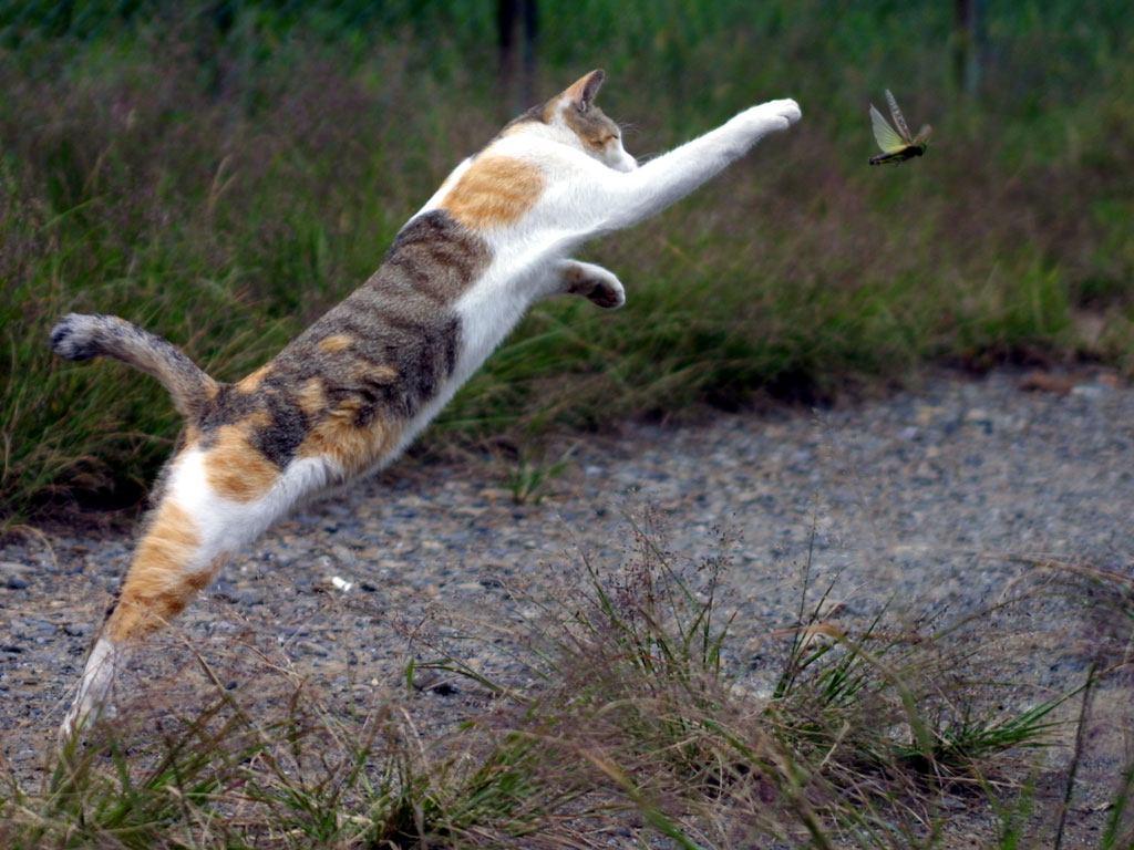 pisicile si insectele