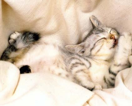 operatie sterilizare pisici