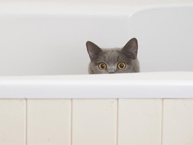 pisica litiera