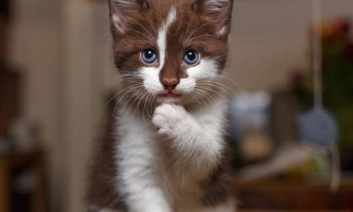 Medicamente care pot otravi pisica