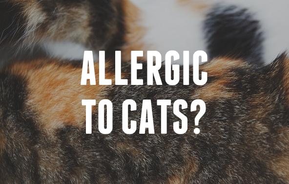 Pisici hipoalergenice
