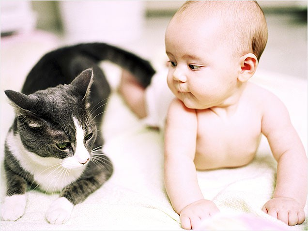 parul de pisica pericol bebelusi