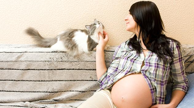 toxoplasmoza la pisici