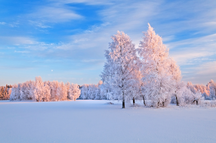 Natural winter background.