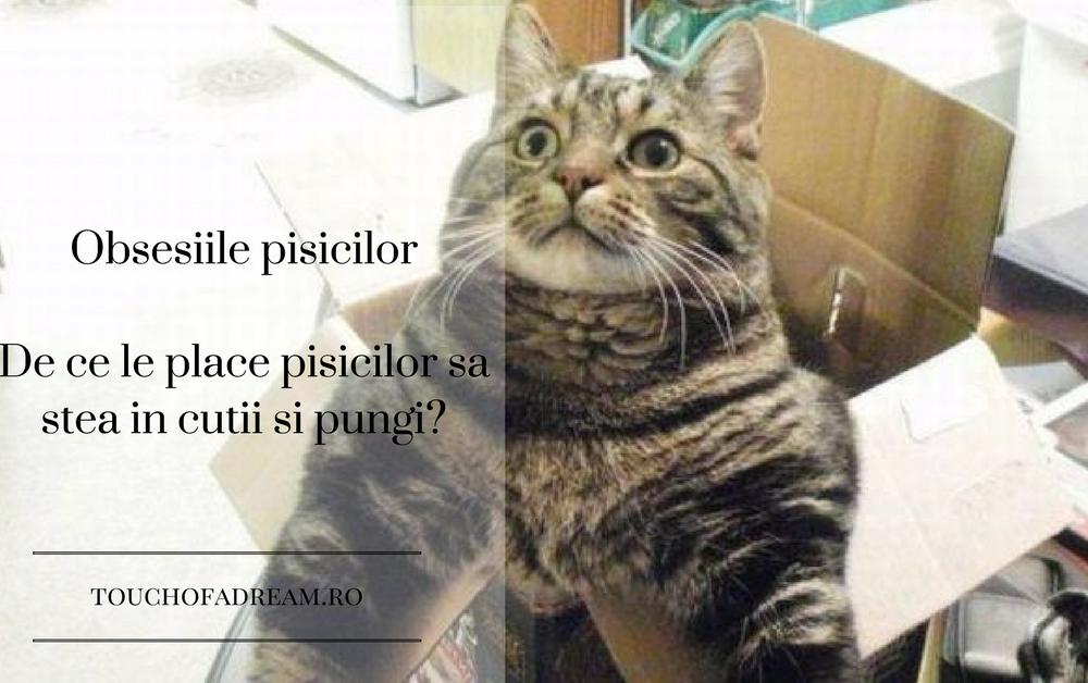 Obsesiile pisicilor de ce le plac cutiile si pungile