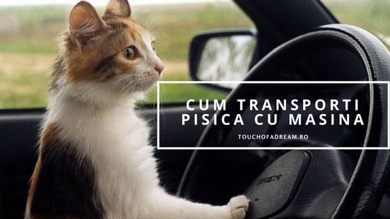 Cum transporti pisica cu masina