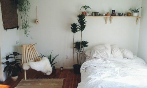 Cum scapi de insomnie cu ajutorul plantelor