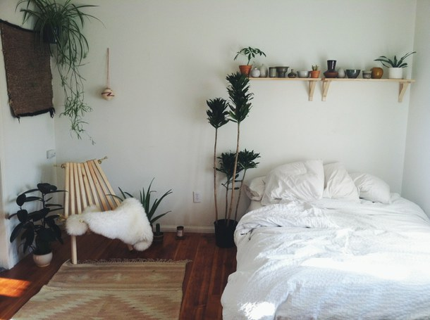 plante in dormitor